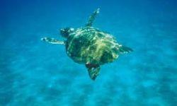 Остров Закинтос: солнце, море, пляж и… тишина…